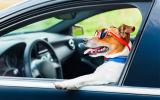 Tips voor een autoreis met je hond