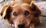 Hond verlatingsangst