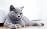 Bach bloesem Mix 110 Agressie bij katten