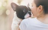 Bach bloesem Mix 102 Onzindelijkheid bij honden