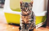 Bach bloesem Mix 112 Onzindelijkheid bij katten