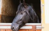Bach bloesem Mix 121 Bange paarden