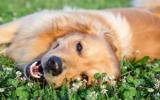 Bach bloesem Mix 104 Aanvallen bij honden