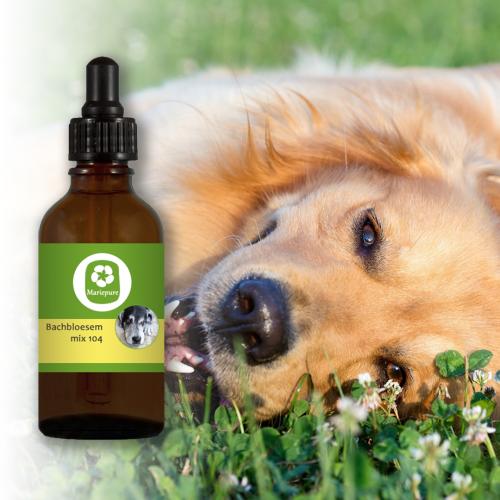 Bachbloesem Mix 104 Epilepsie bij honden