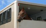 Bach bloesem Mix 122 Trailer stress paard