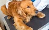 Bach bloesem mix 106 Stress bij honden